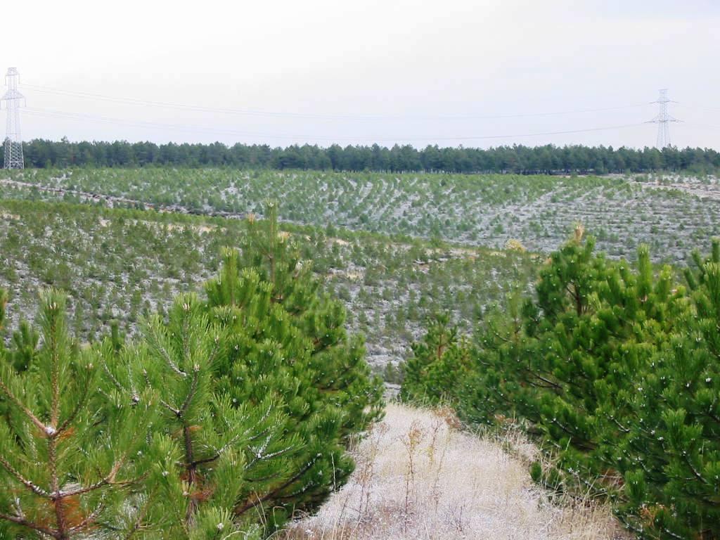 plantaciones7