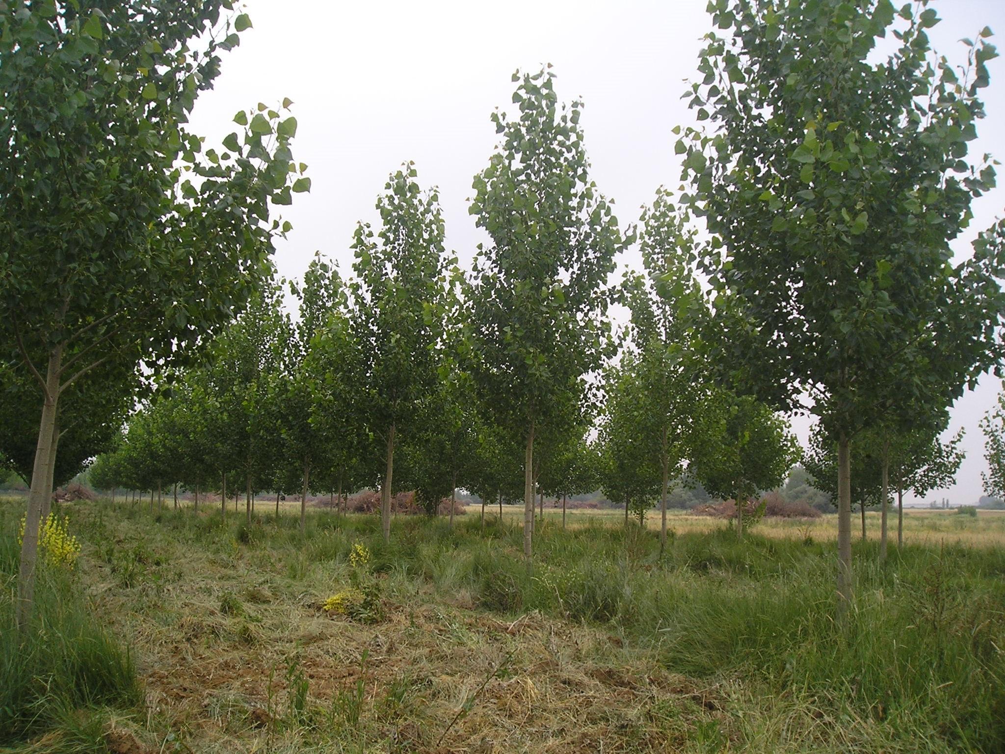 plantaciones3